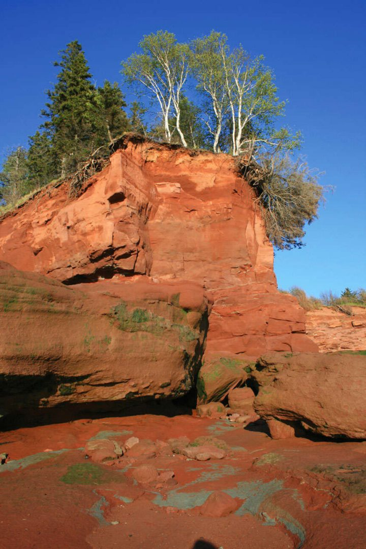 Bay of Fundy Trees