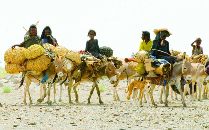 Tuareg women donkey