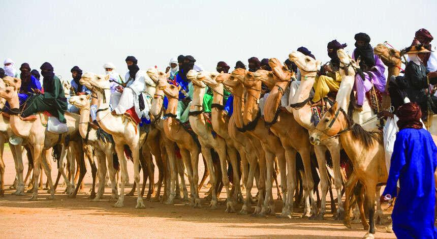 Niger Desert Cure Sale Camel Men