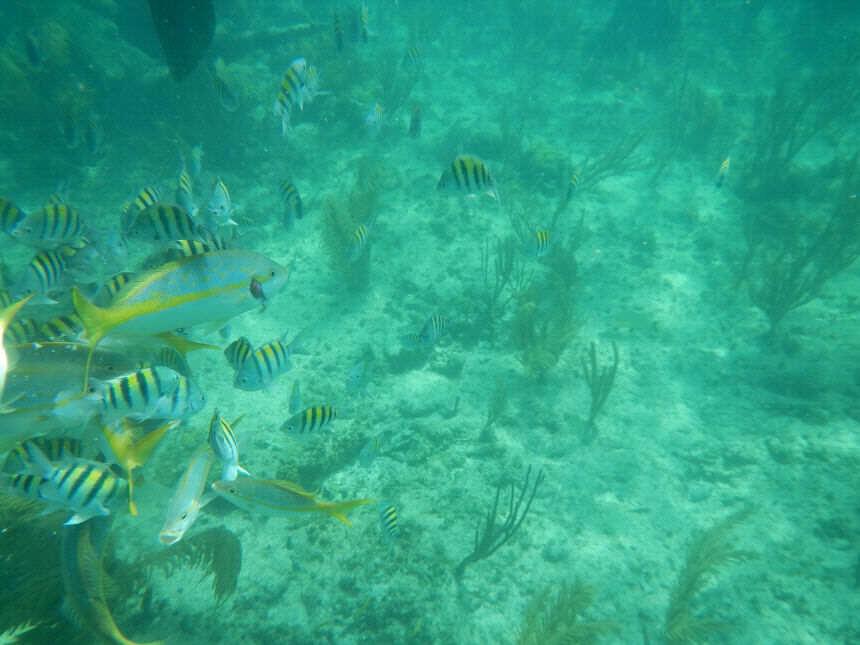 Jardines del Rey Cuba Diving