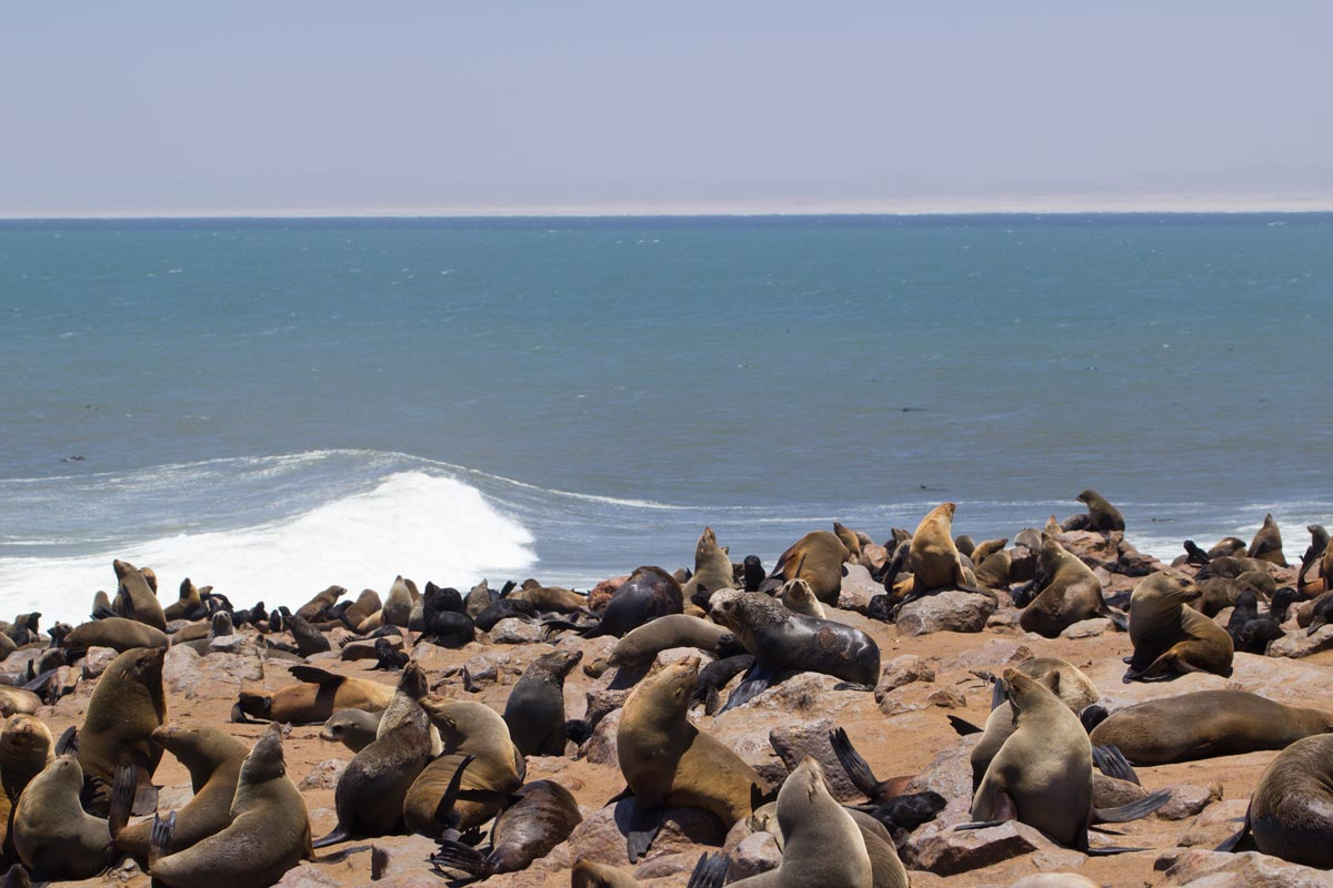 cape cross seals namibia self drive safari