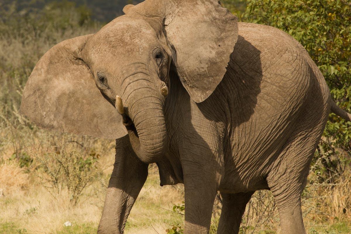 namibia self-drive safari