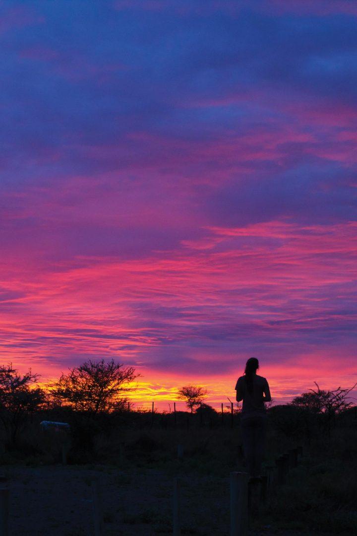 etosha park namibia self drive safari