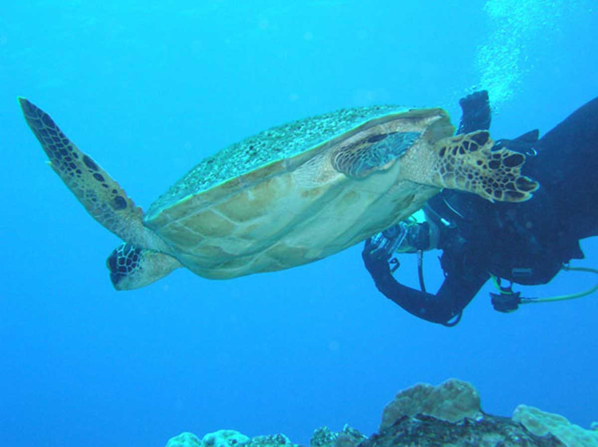 cook islands diving