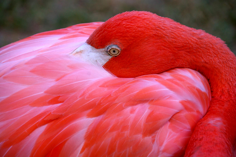 nassau bahamas flamingo