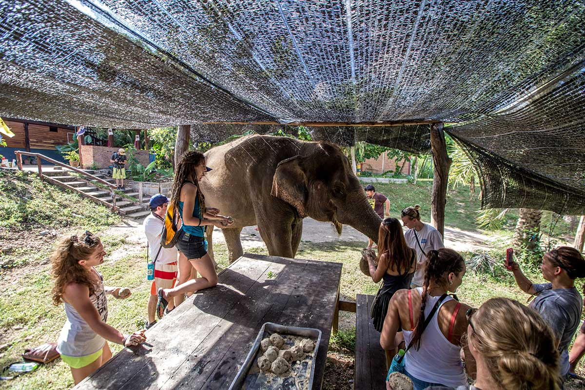 ethical thai elephant tourism