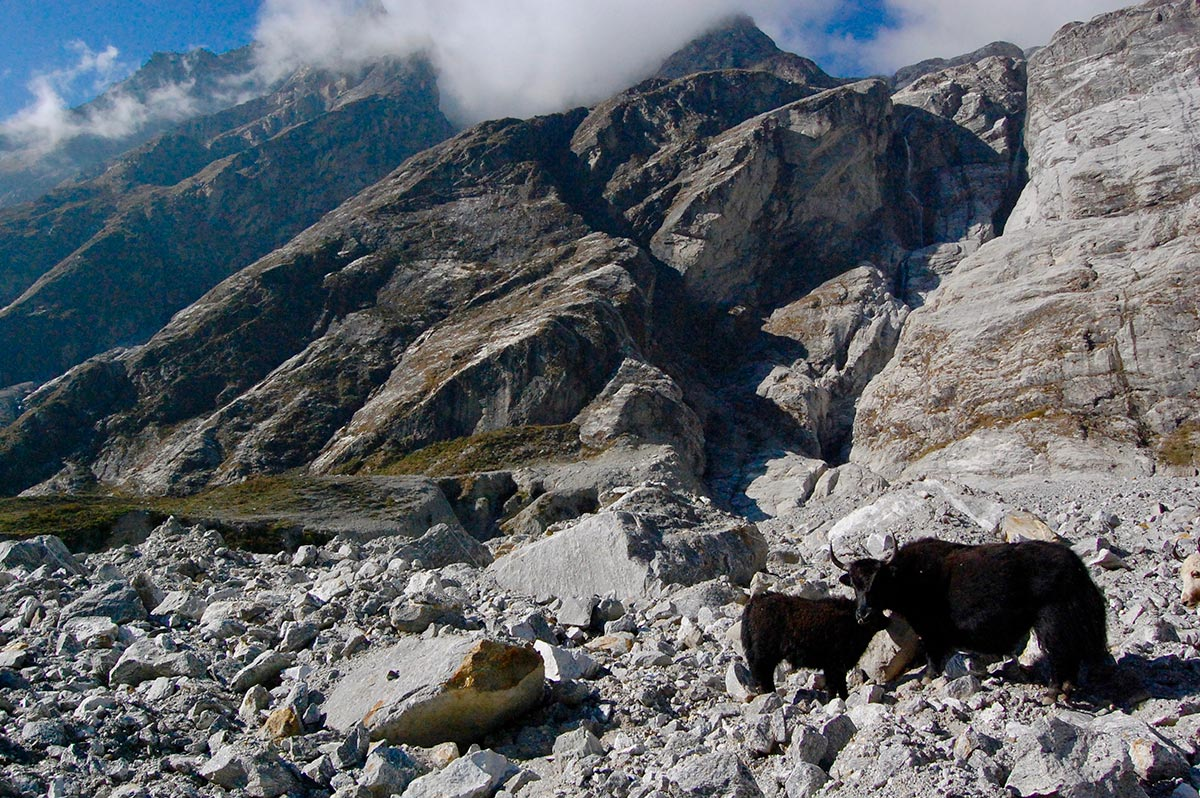 langtang nepal tourist travel
