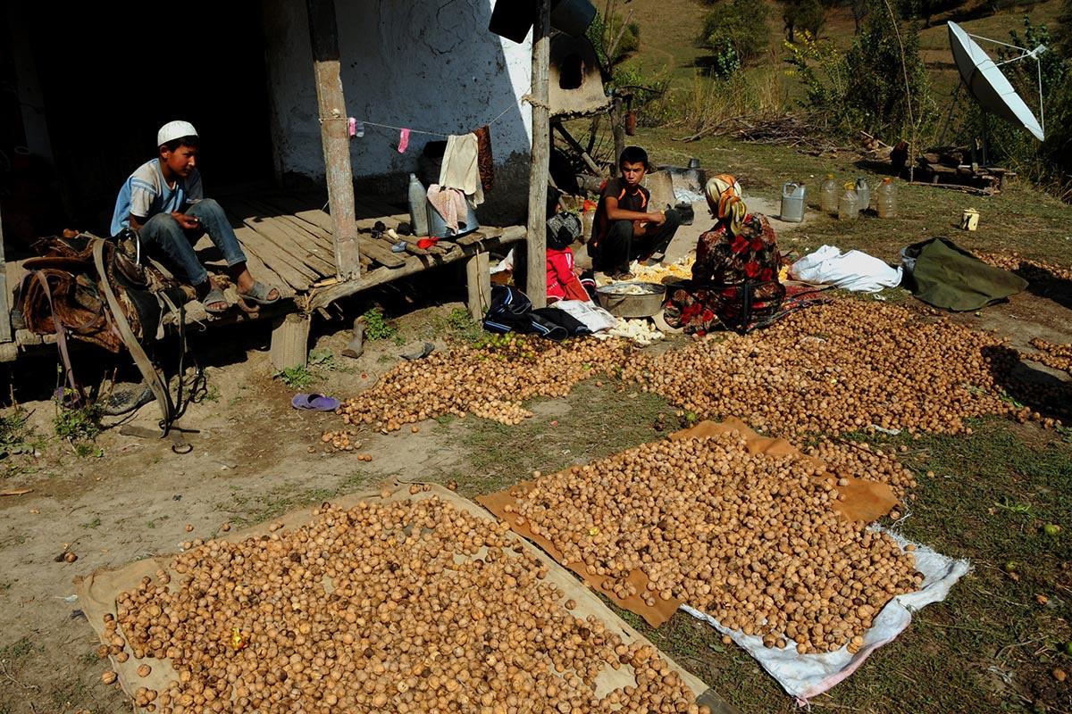 kyrgyz walnuts