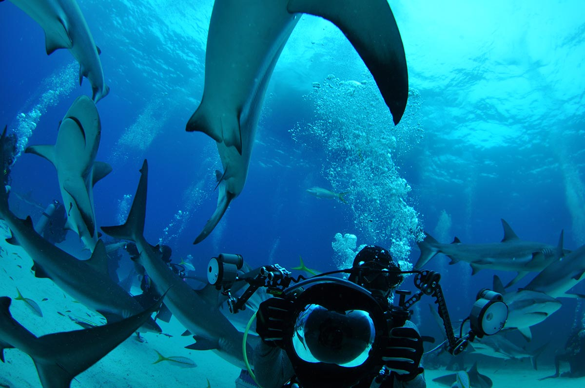bahamas shark feed guide