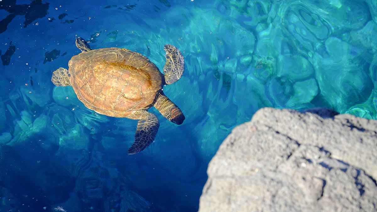 green turtle diving tips