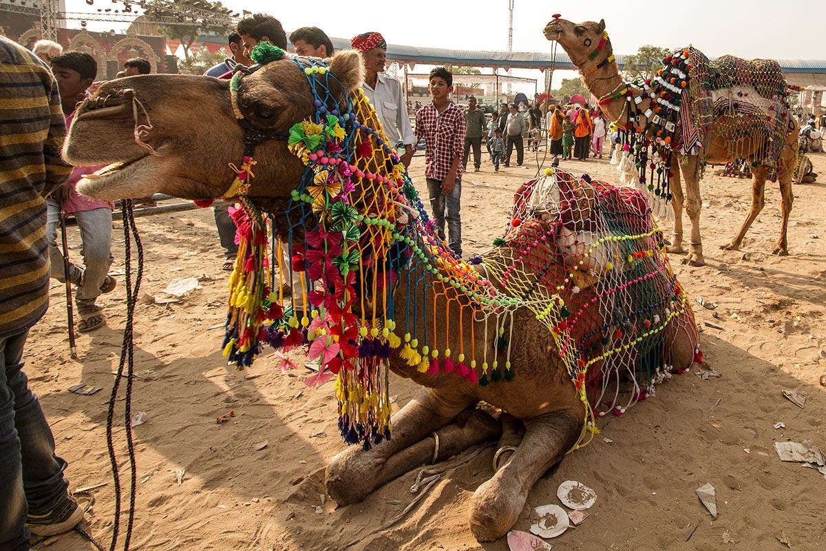 pushkar camel fair photos