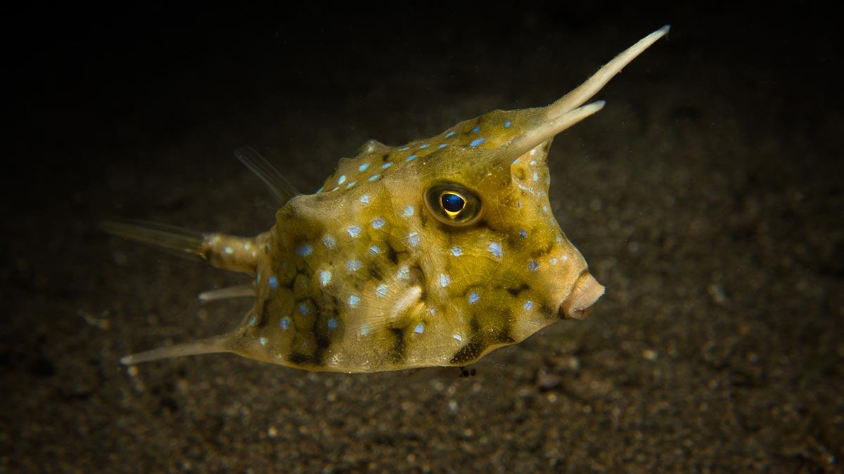 best underwater photography tips