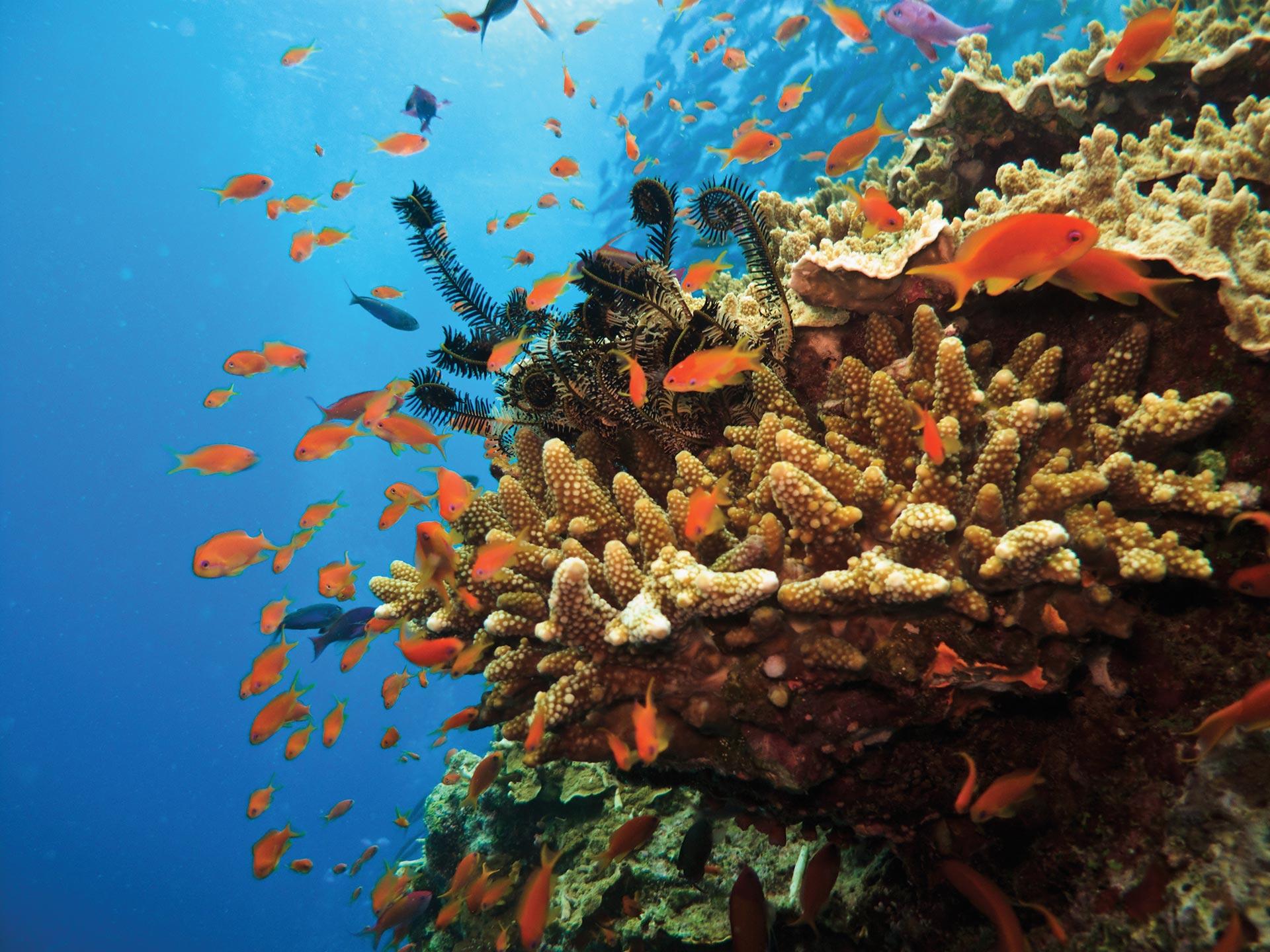 great barrier reef snorkel tour