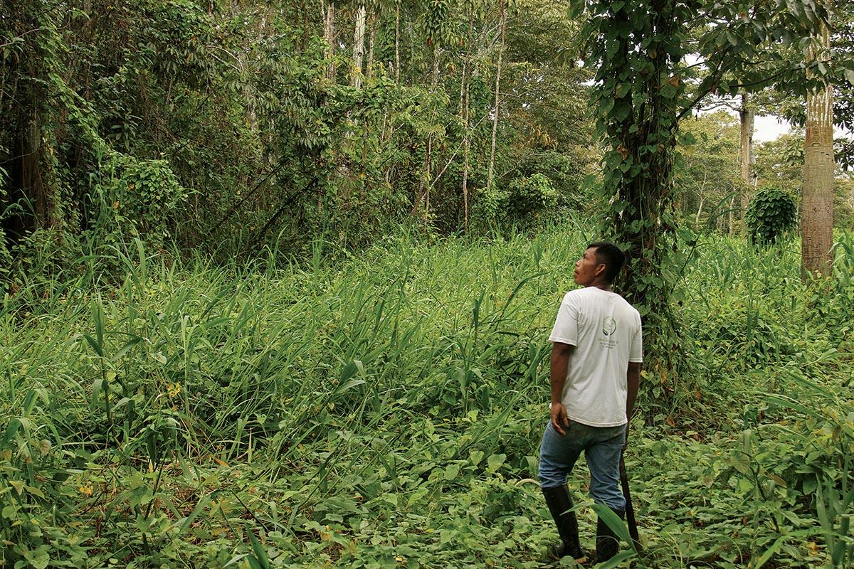 iquitos jungle lodge
