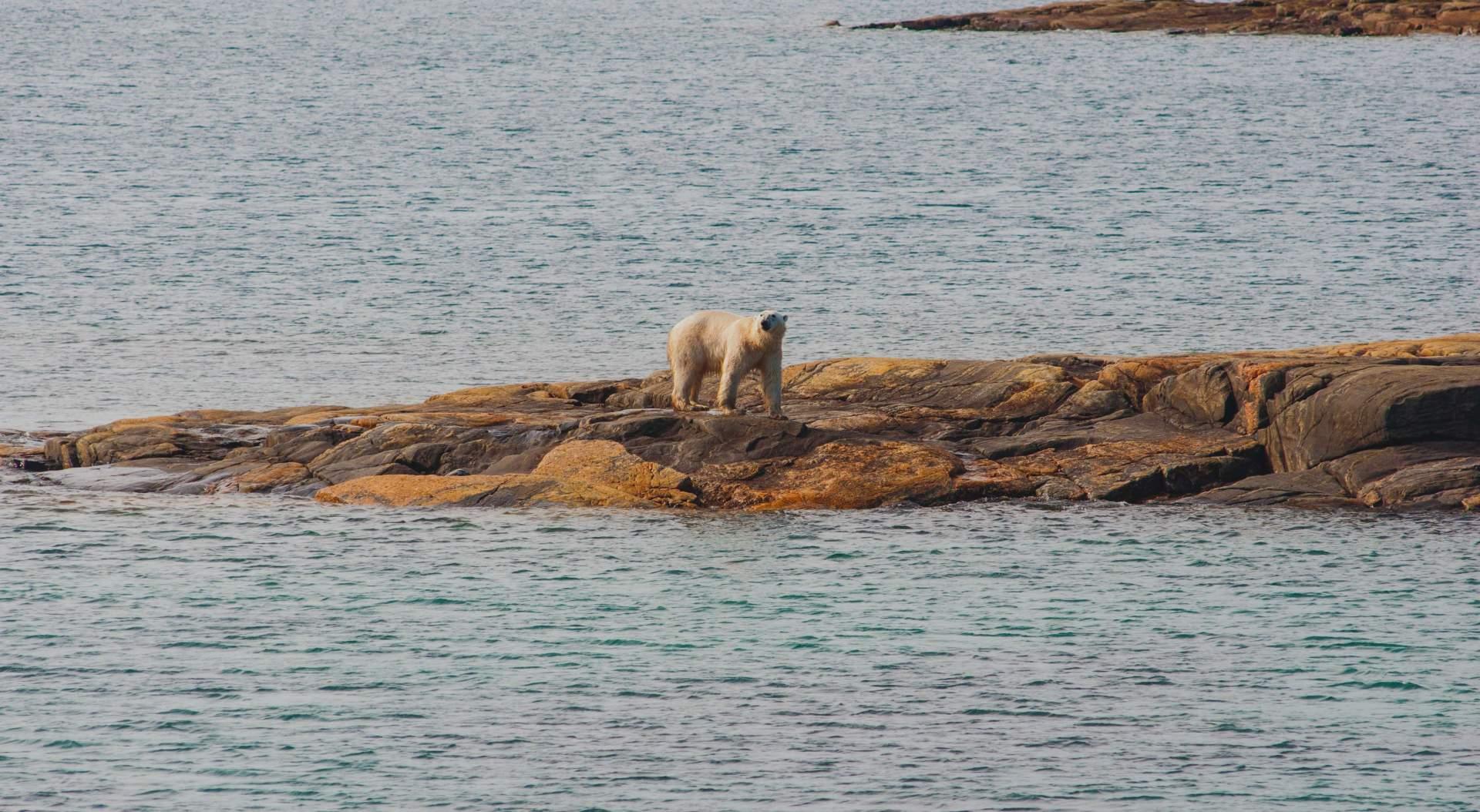 Nunavut Polar Bear Sighting 0292