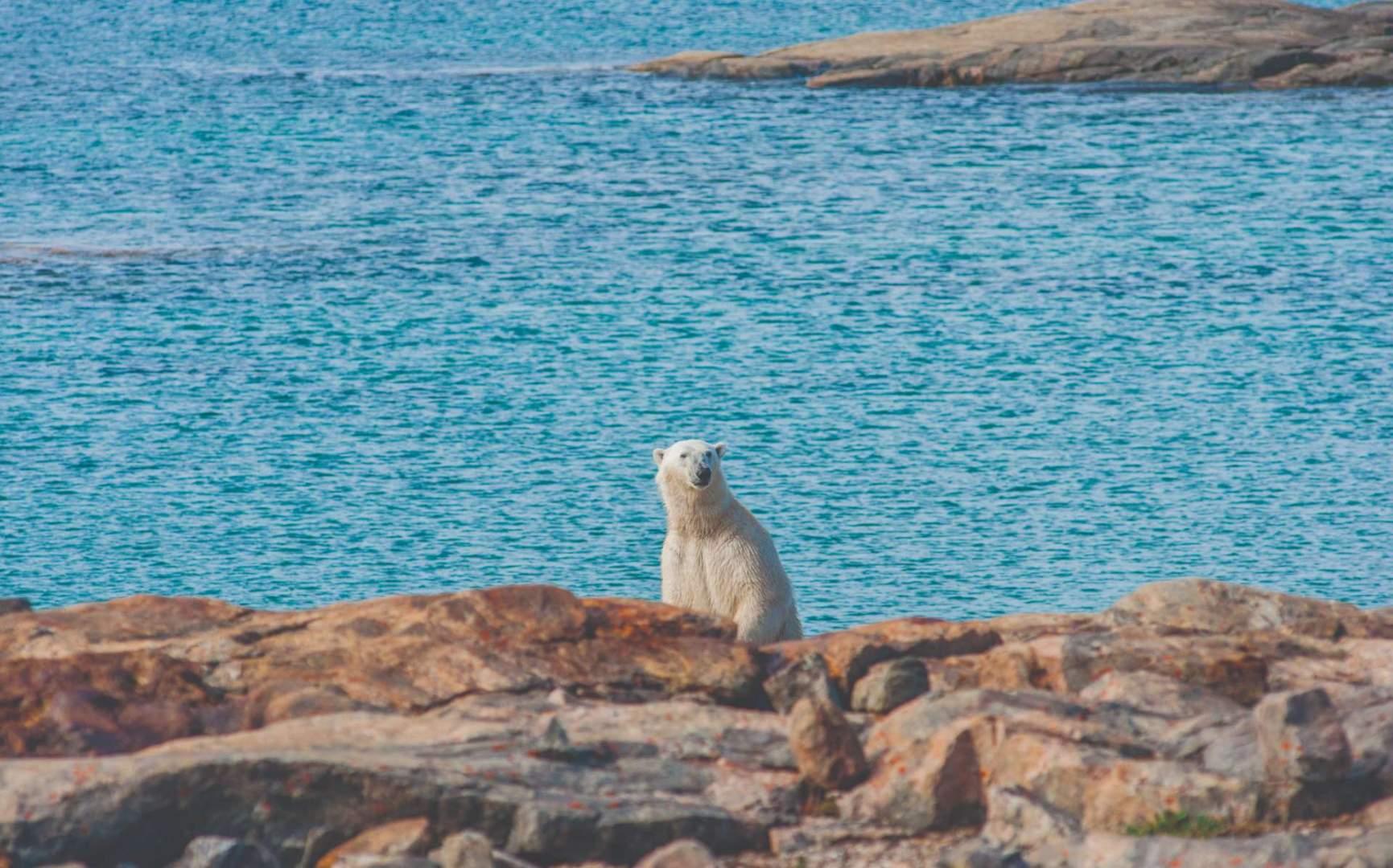 Nunavut Polar Bear opXpedition