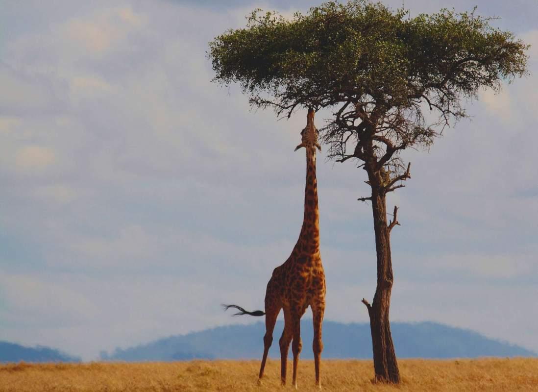 kenya safari, savannah, wildlife