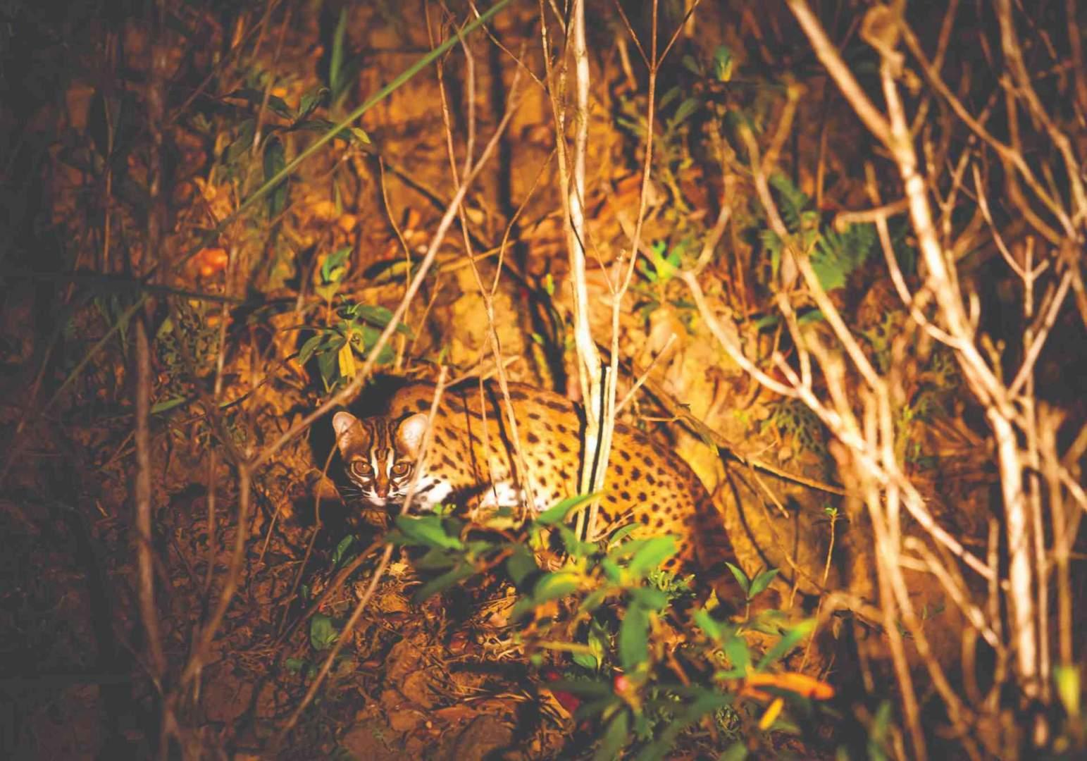 Borneo Jungle Malaysia _O'connor 6