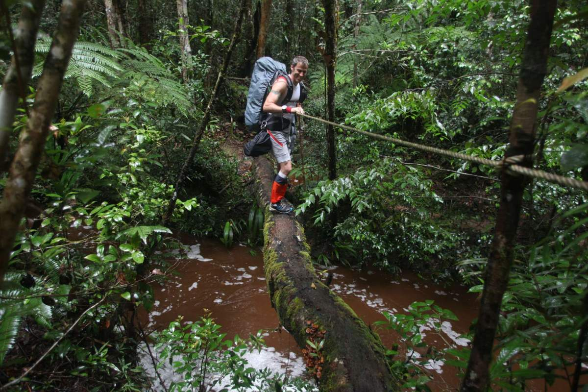 Borneo jungle Malaysia _O'connor 1